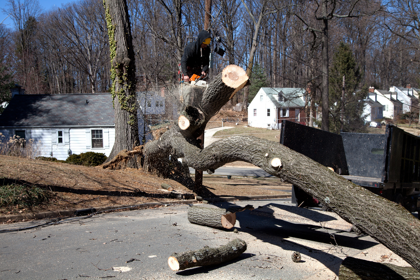 How Does Tree Removal Work? A Homeowner's Guide
