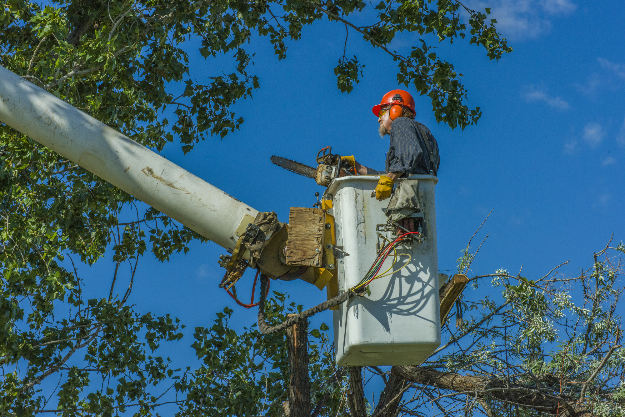 When Should You Get Emergency Tree Removal In Farmington?