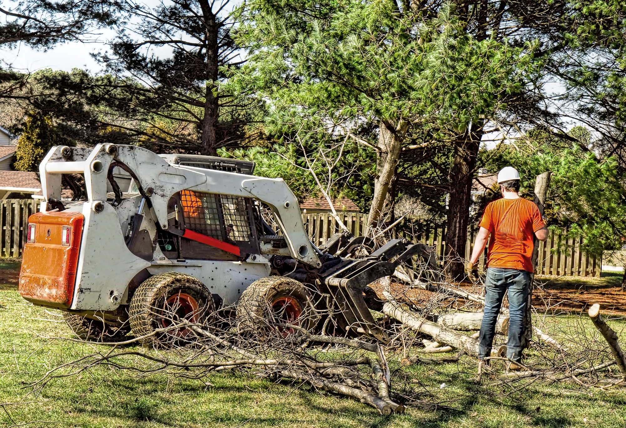 professional tree removal