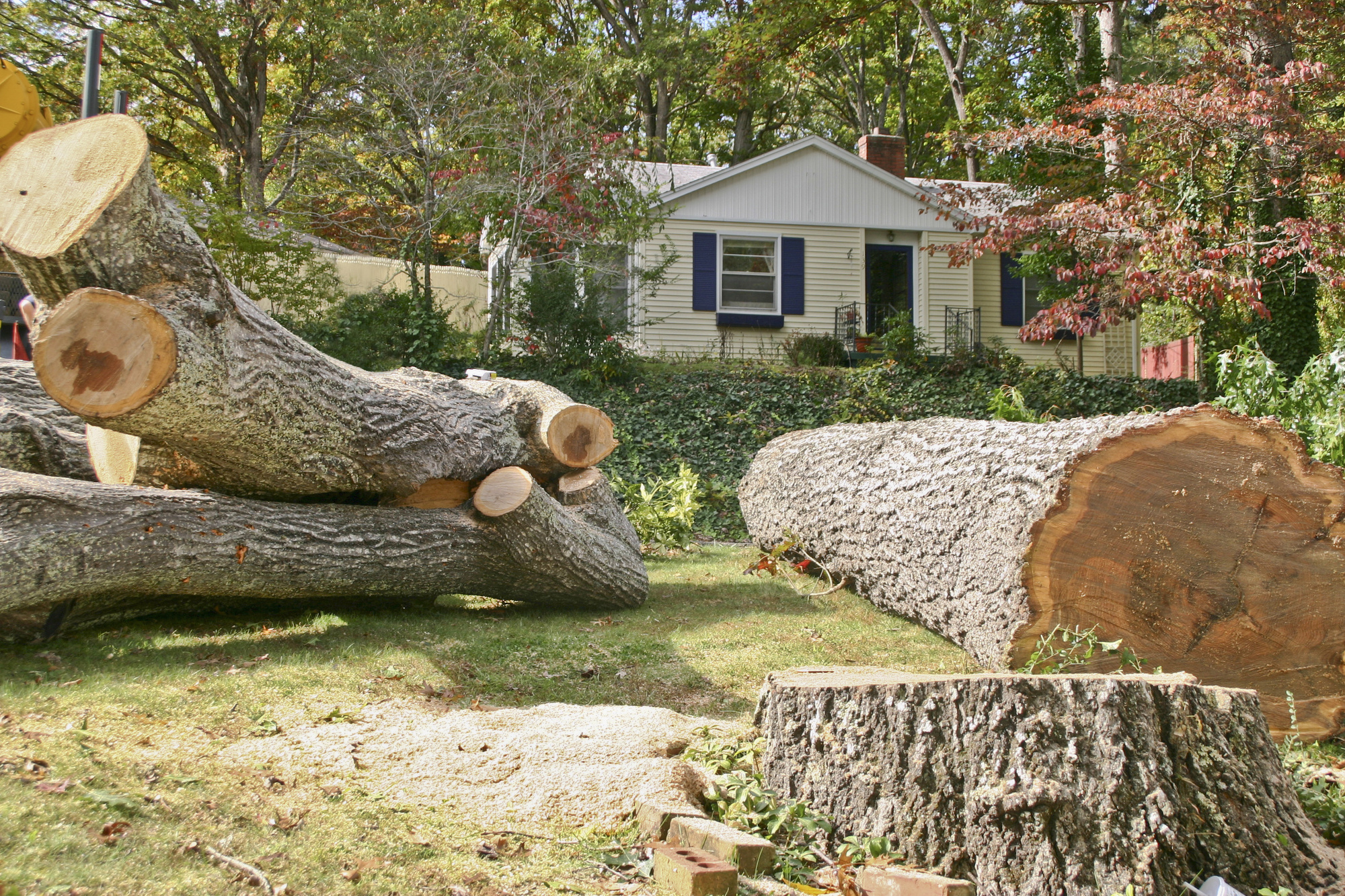 fallen tree removal cost