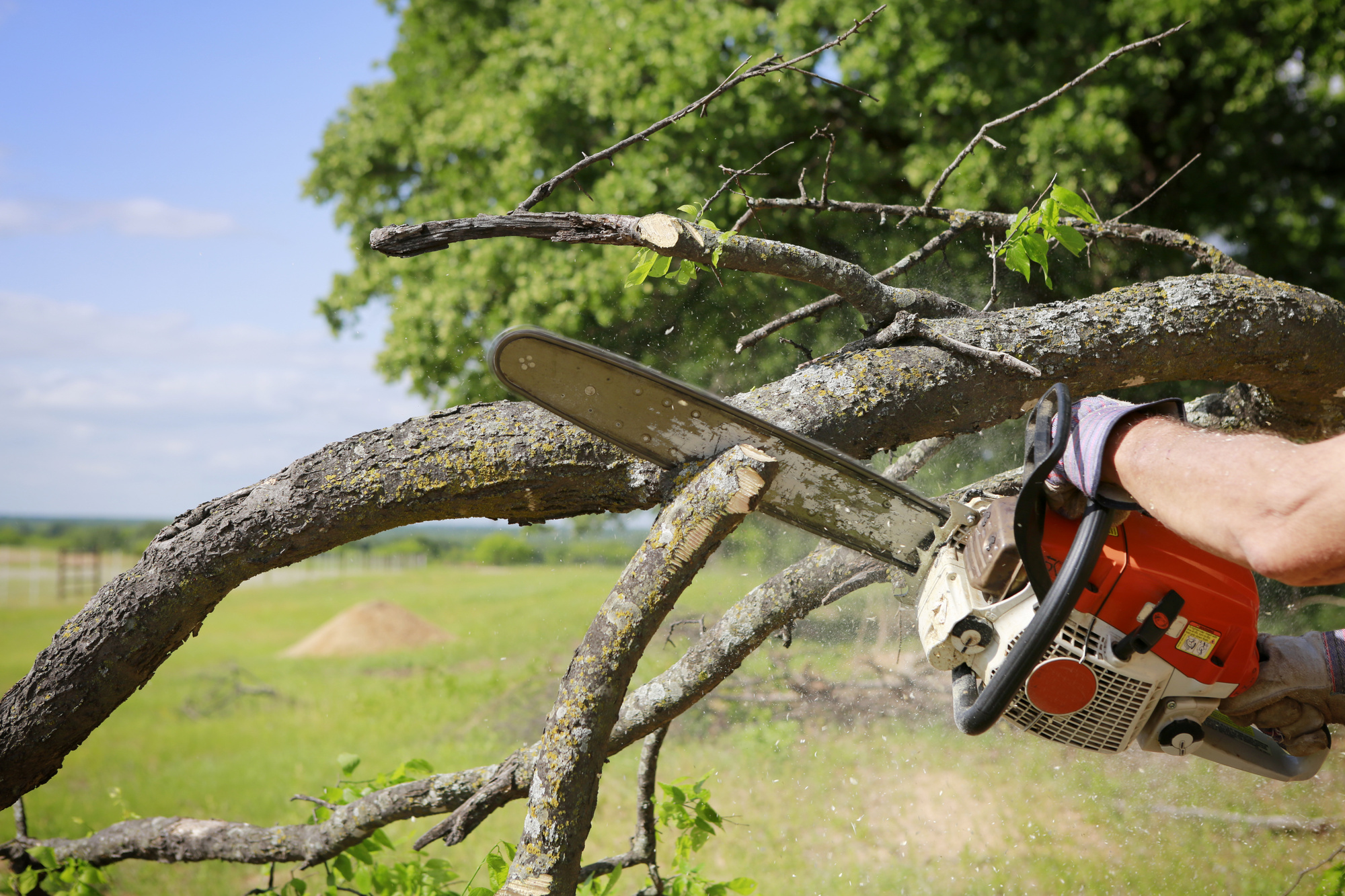 tree service in Lakeville