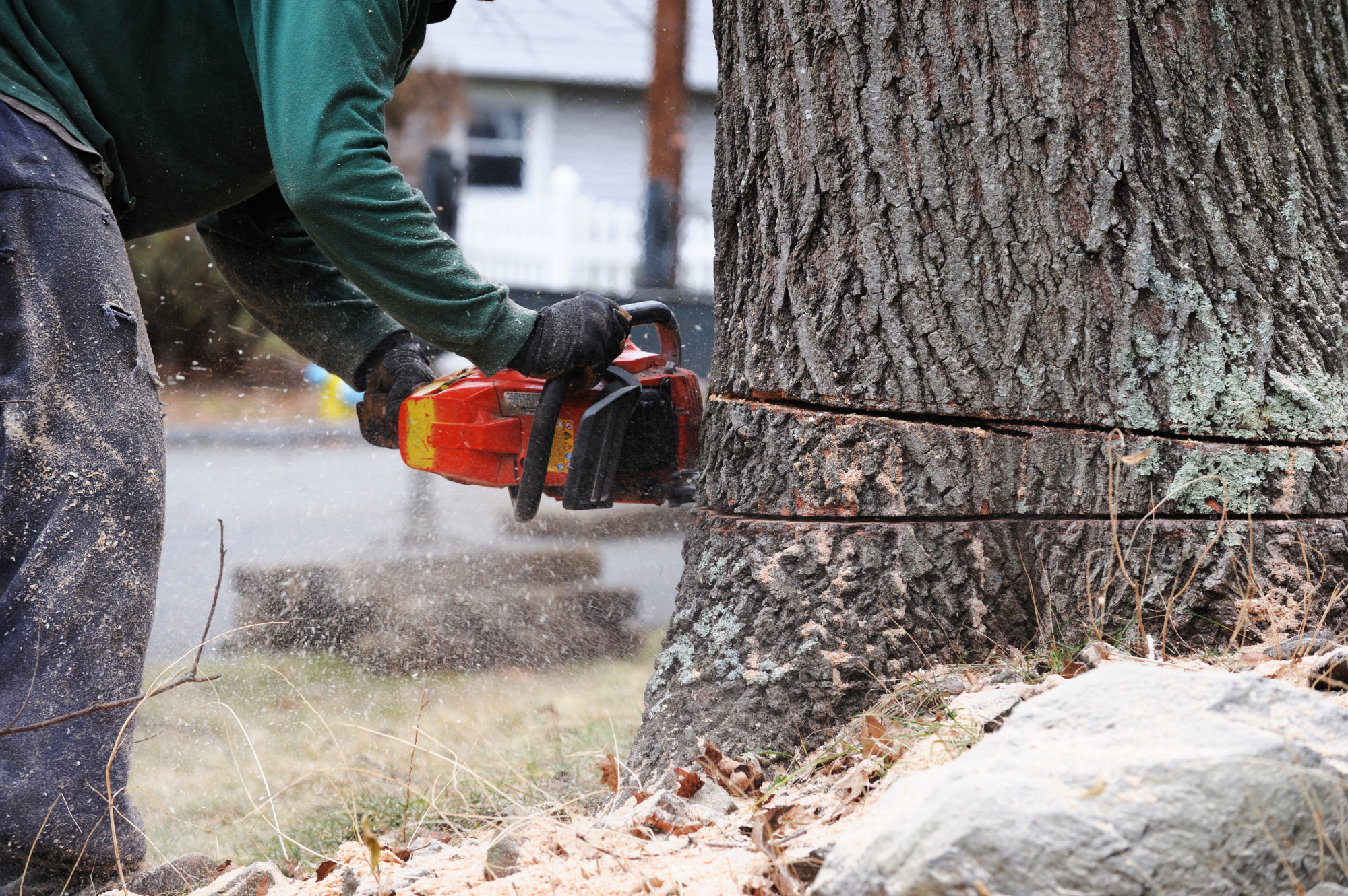 Start Today to Find the Best Tree Removal Service Near You